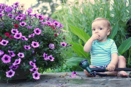 garden themed children's books, flowers and vegetables