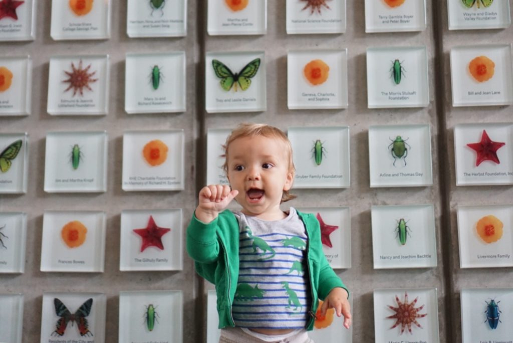 Visit San Francisco with Toddler, california academy of sciences
