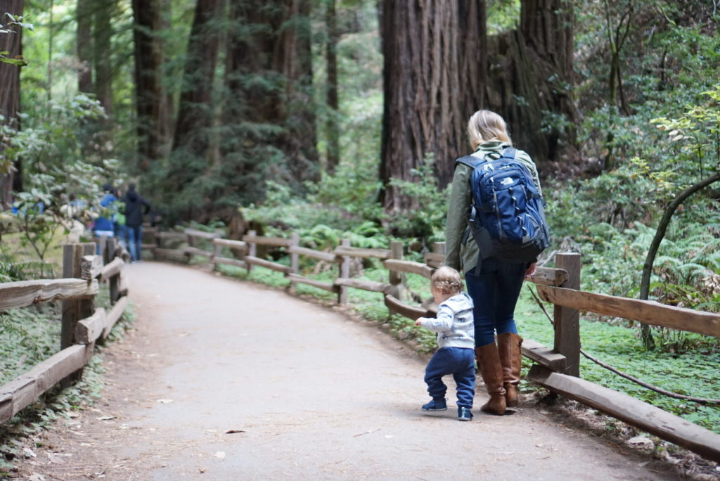 Muir Woods San Francisco Sausalito With Baby Redwood Forest