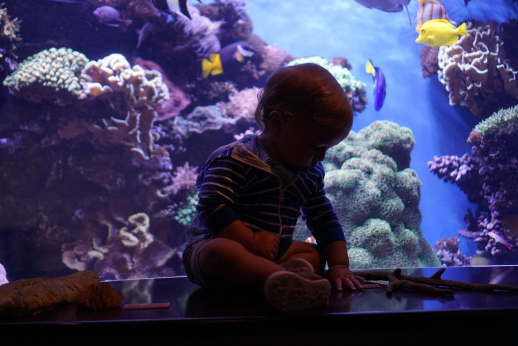 monterey bay aquarium san francisco with toddler