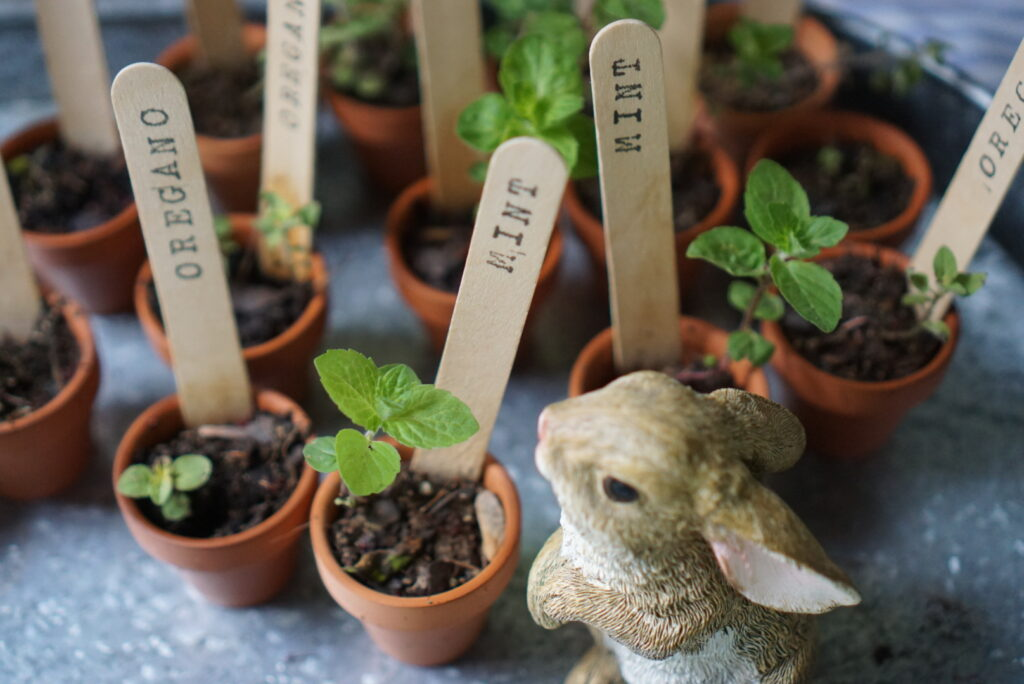 Peter Rabbit first birthday party favors